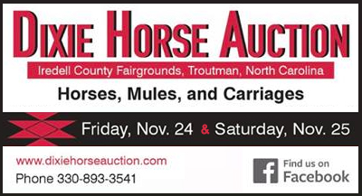 Dixie Horse Auctions