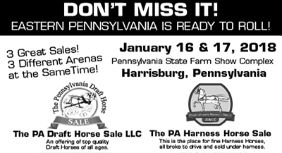 Morgan Horse Auction (East Penn)